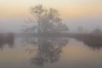 Дерево в тумані