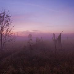 Туман на полі.