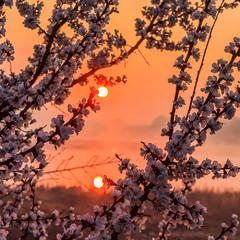 Весняний ранок.