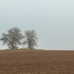 Туманний ранок у полі