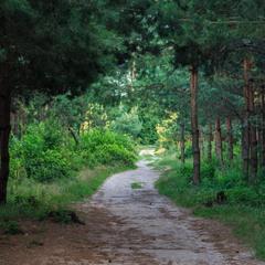 Прогулка в лесу.