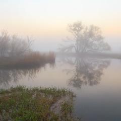 Туманними берегами р. Ірпінь