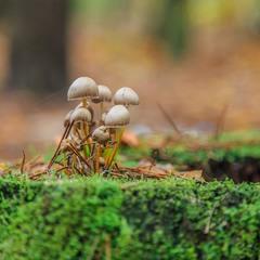 Лісова прогулянка