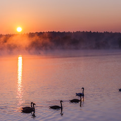 Ранковий променад