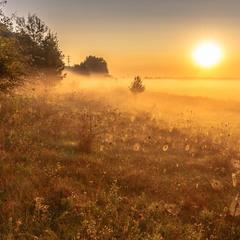 Туман на світанку.