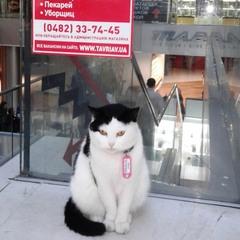 ..а о вакансии кота тут, увы, ничего не сказано((
