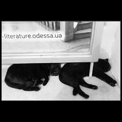 Сон литературной Одессы:)