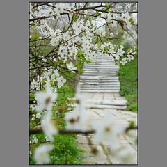 Про старую лестницу весной..