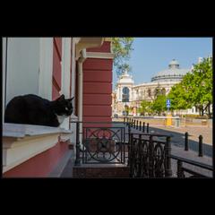За одесских кошек)
