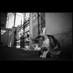 Кот у ворот))