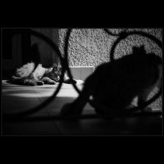 Хитросплетения жизни кошек..