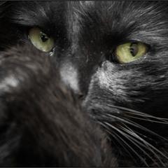 """""""Задумчивый"""" портрет кота:))"""