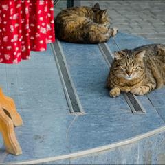 За одесских котов))