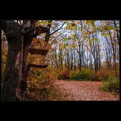 О прогулке осенним лесом..