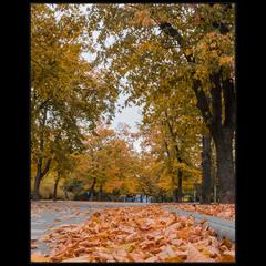 Осенне-парковая..