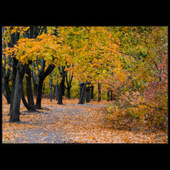 Осенняя..