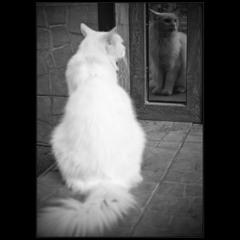Про нарцисизм у котов))
