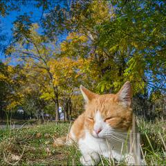 Король Оранжевая.. Осень))