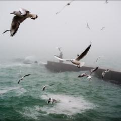 море, чайки..