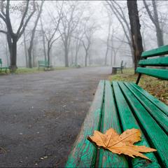 Импровизация с желтым листом в опустевшем парке))