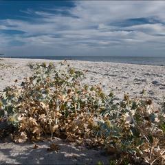Пустынный пляж Кинбурнской косы
