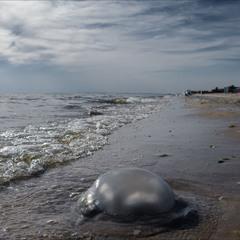 Пляж на Кинбурнской косе