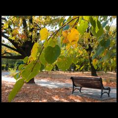 Осенняя, парковая..
