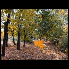 Про желтый лист осенний. ..