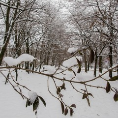 Парковая-зимняя..