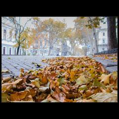 Одесская осень