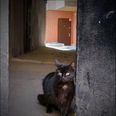 *Только черному коту и не везет..*