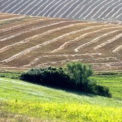 Словацкие поля