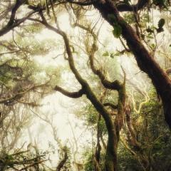 Сказочный лес - 2