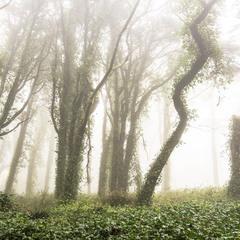 Зачарованный лес Синтры