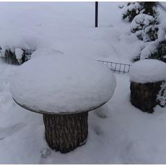 Городские зимние грибы!