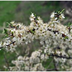 Весеннее буйное цветение