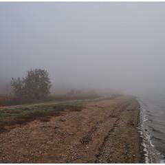 Берег лимана в тумане