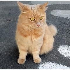 Котик с янтарными глазками!