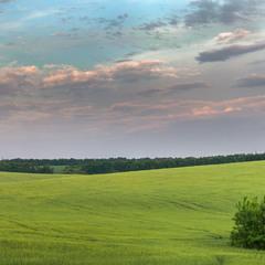 Вечір над ячмінним полем...