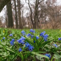 Весняний настрій...