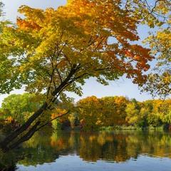 Яскрава осінь...