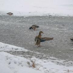 Танцы на льду...
