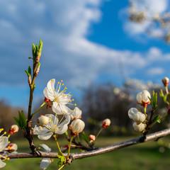 Яркие краски весны...