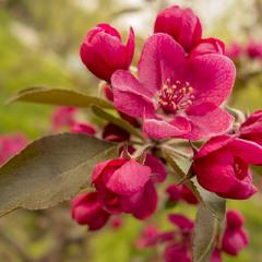 Цвет Весны