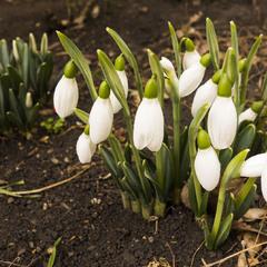 Предвестники весны