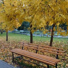 Осень в парке ...