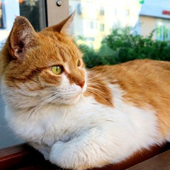 Котик на остановке
