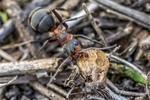 Рабочие будни одного муравейника