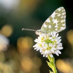 Бабочки сентября
