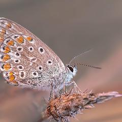 Бабочки октября